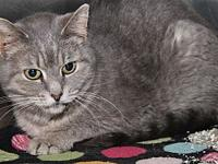 Sweetie's story Sweetie is a beautiful adult female