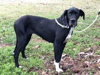 Sweetie is a great dog with a loving temperament. She