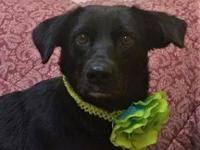 SWEETIE's story HSPC's adoption fee is $100 with an