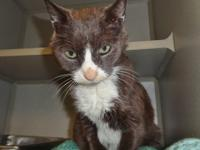 SWEETIE is just that and entered the shelter on