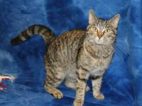 What a beauty! Sweetiepie (#345447) is a perfect 6