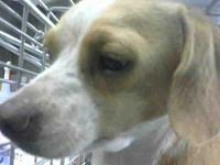 Sweetness needs local foster's story Please contact