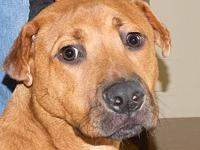 Sweettart's story Sweettart is one of our Hound mix