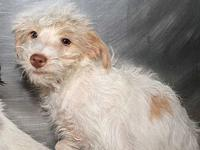 Swiffer's story Swiffer came to Paw as a rescue/owner