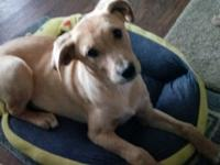 Syndee is a 4 month old lab mix. She is very sweet and