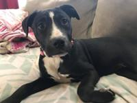 Born October 19, 2017, Sydney is a female Boxer mix