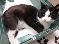 """Sylvester"" was among 10 cats that were abandoned when"