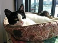 Sylvia's story Sylvia is a domestic shorthair who was
