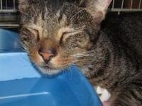 SYSCO's story Sysco is a 5 1/2 year old neutered male