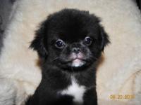 THIS LITTLE BOY is named T-Bear as in Teddy Bear. He
