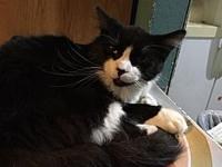T Bill's story This handsome boy is good with cats,