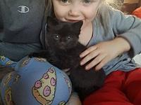 T'Challa's story The adoption fee is $85.00 with an