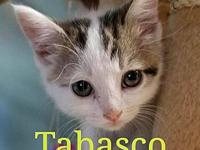 Tabasco's story I'm the shyest of my brothers and would