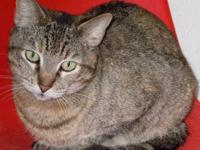 Tabby - Babs - Medium - Adult - Female - Cat Babs is a