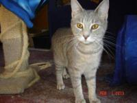 Tabby - Bonny - Medium - Baby - Female - Cat Look at