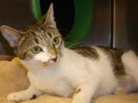 Tabby - Brown - Albany-new Hope - Small - Baby - Male -