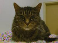 Tabby - Brown - April - Small - Senior - Female - Cat