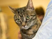 Tabby - Brown - Bianca - Small - Adult - Female - Cat I