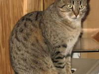 Tabby - Brown - Charlotte - Medium - Young - Female -