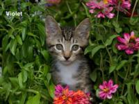 Tabby - Brown - Gator - Medium - Baby - Male - Cat