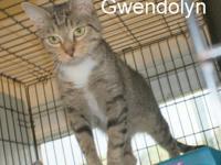 Tabby - Brown - Gwendolyn - Medium - Adult - Female -