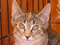 Tabby - Brown - Hazel & Gretel - Medium - Baby - Female