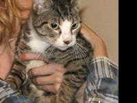 Tabby - Brown - Libby - Medium - Young - Female - Cat