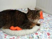 Tabby - Brown - Lucy - Medium - Adult - Female - Cat