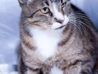 Tabby - Brown - Mo - Small - Adult - Male - Cat