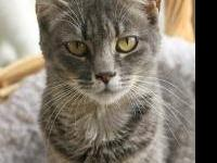 Tabby - Brown - Peaches - Small - Adult - Female - Cat