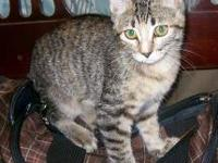 Tabby - Brown - Penny - Small - Adult - Female - Cat