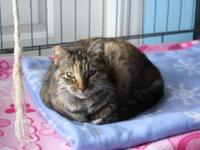 Tabby - Brown - Primrose - Small - Young - Female -