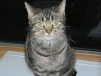 Tabby - Brown - Raja - Small - Senior - Female - Cat