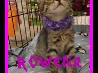 Tabby - Brown - Rowena - Medium - Young - Female - Cat