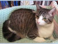 Tabby - Brown - Tally - Small - Adult - Female - Cat Hi