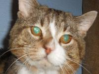 Tabby - Brown - Tom - Small - Adult - Male - Cat