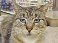 Tabby - Brown - Willow - Small - Adult - Female - Cat