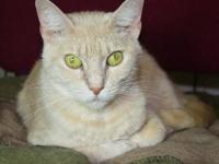 Tabby - Buffy - Good With Other Cats! - Small - Adult -