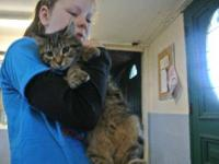 Tabby - Burke - Small - Baby - Male - Cat Burke came to