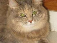 Tabby - Citrus - Medium - Adult - Female - Cat Sweet