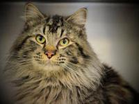 Tabby - Clark - Adopt For $40 - Medium - Young - Male -