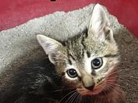 Tabby's story This litter of 3 tiny little girls was
