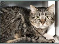 TABBY's story $97.50 FEE INCLUDES: neutering/spaying,