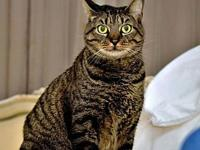 Tabby FE2-8876's story You can fill out an adoption