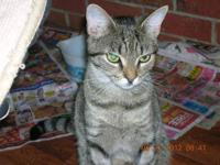 Tabby - Female Tabby/amp.tail - Small - Young - Female