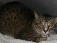 Tabby - Grey - 12913 Rescued 7 Babies (j) - Small -