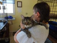 Tabby - Grey - Aimee - Medium - Adult - Female - Cat