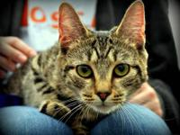 Tabby - Grey - Cheeks & Zena - Small - Young - Female -