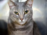 Tabby - Grey - Fisher - Medium - Young - Male - Cat