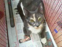 Tabby - Grey - Milly - Medium - Young - Female - Cat